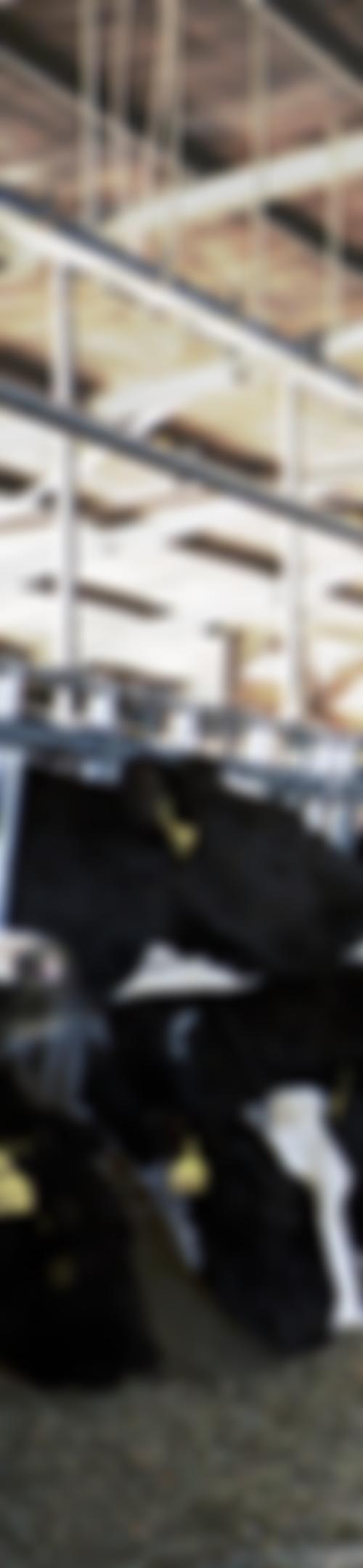 Image for Das System Milch